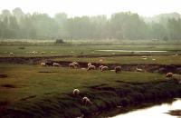 Ranch of Granville  牧場(グランヴィル)