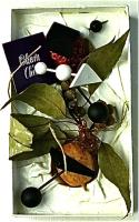 Present of summer 1999 夏の贈り物 20.5×12cm