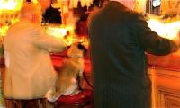 Dog that sits on the chair 椅子に座る犬 Paris ⓒToshihiko Shibano