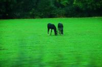 Twin colts? 双子の子馬? ⓒToshihiko Shibano