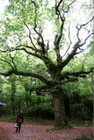 Hearty laughing tree 大笑いをしている樹木 ⓒToshihiko Shibano