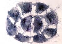 No10   Acryl  Color-Ink  Pen  Paper   32×41cm  1983 ⓒToshihiko Shibano