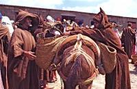 Market on Thursday 9 木曜市場(Khemis Anjra)輸送方法がロバ、物入れがカゴというのはエコの最先端かも ⓒToshihiko Shibano