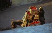 Donkey that carry tomato トマトを運ぶロバ 食事中にトマトの箱を山ほど積んだロバが通ったのであわててシャッターを切った。 ⓒToshihiko Shibano