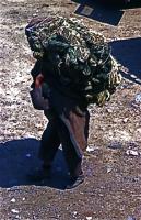 A man who carries heavy rope 重そうなロープの束を運ぶ男 一体どれくらいの重量があるのだろうか? 人件費がただみたいな国では、こういう光景が珍しくない。木曜市場(Khemis Anjra) ⓒToshihiko Shibano