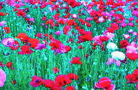 Memory of memory 記憶の記憶 ⓒToshihiko Shibano