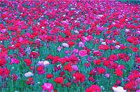 Enormous memory  無数の記憶 ⓒToshihiko Shibano