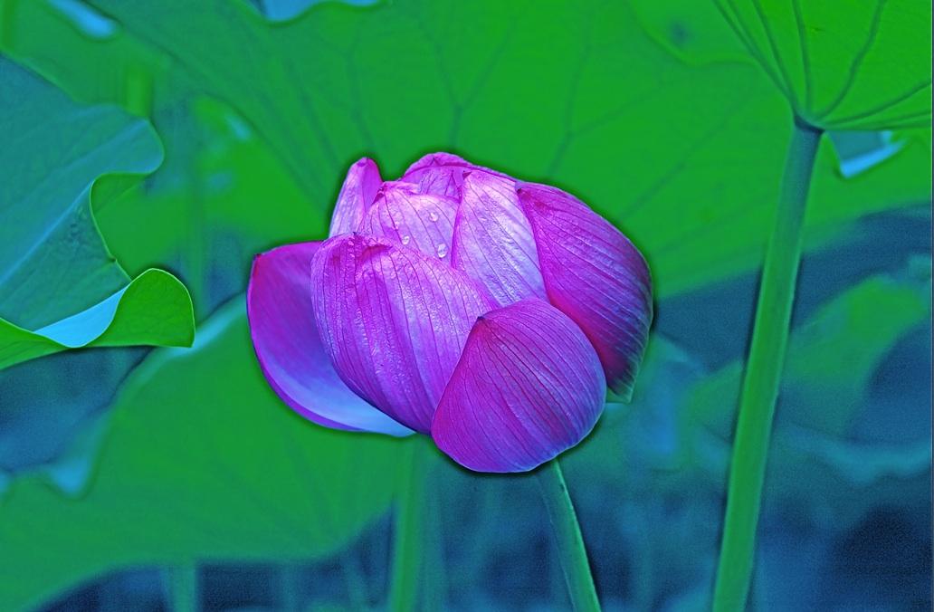 雨の滴で喉を潤す A throat is moistened in a rain drop.  ⓒToshihiko Shibano