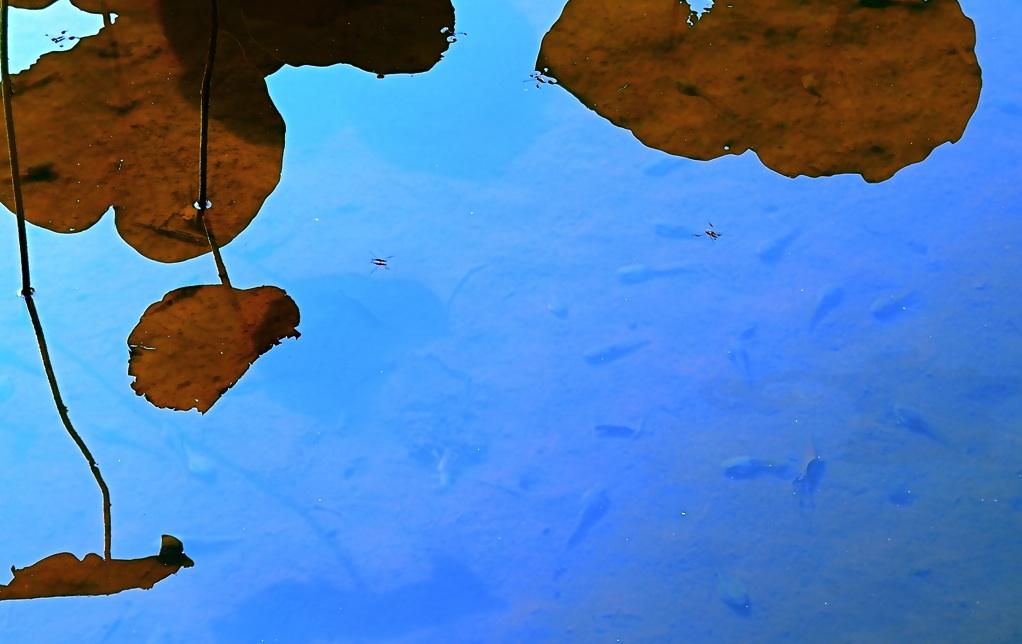 水は命を育む Water cherishes a life.   ⓒToshihiko Shibano