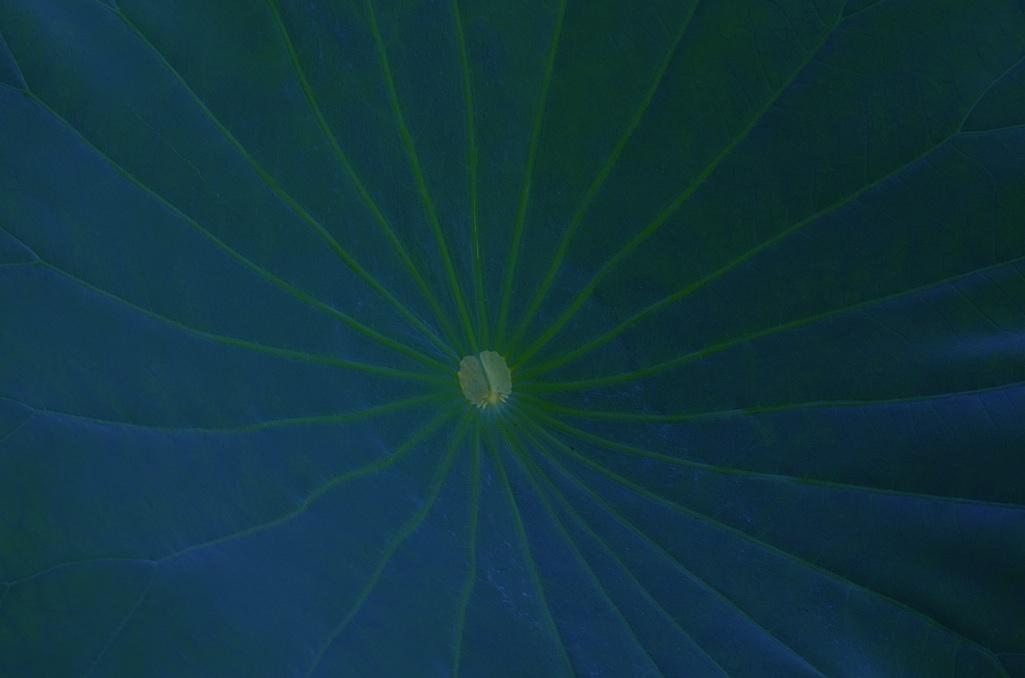 宇宙の中心へ To the center of the universe.  ⓒToshihiko Shibano
