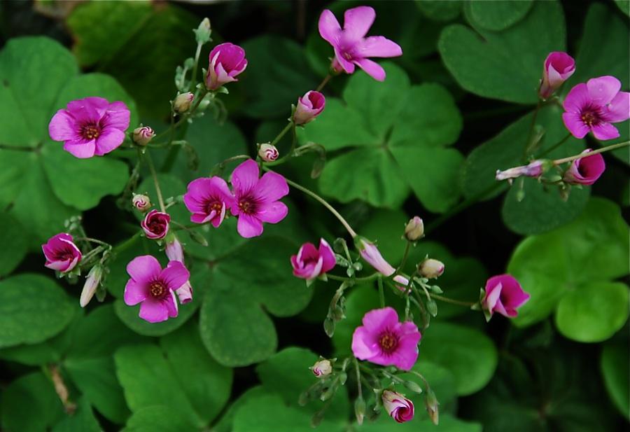 雑草魂 Weeds have gut    ⓒToshihiko Shibano