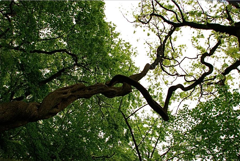 森に春がやってきた  Spring came on to woods ⓒToshihiko Shibano