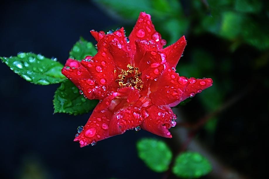 慈雨 Mercy rain     ⓒToshihiko Shibano