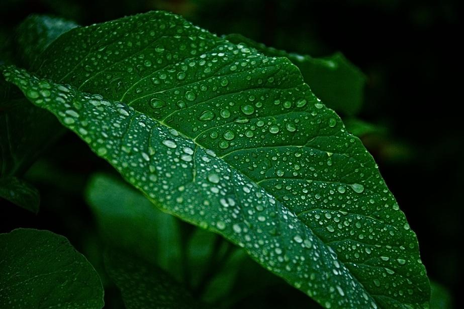 雨の滴模様   The pattern of  rain drops  ⓒToshihiko Shibano