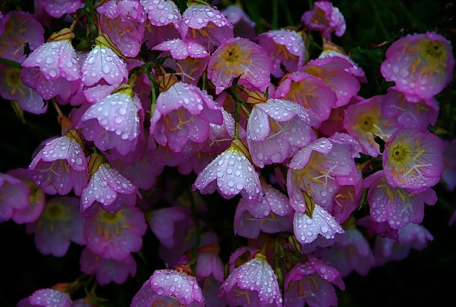 秘密の花園  A secret flower garden  ⓒToshihiko Shibano