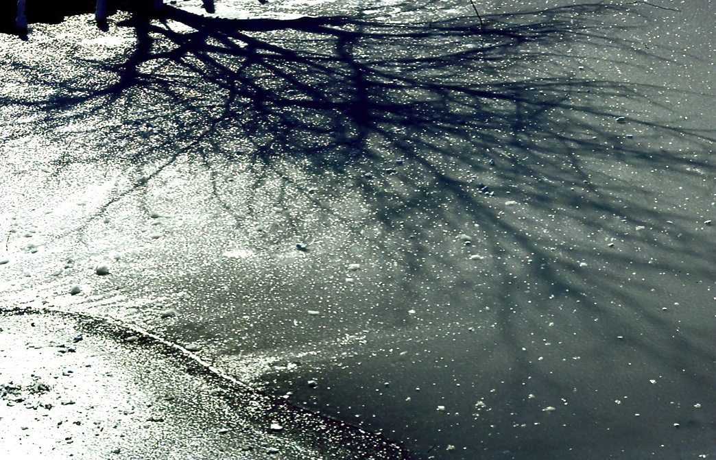 朝の薄氷 Morning thin ice    ⓒToshihiko Shibano