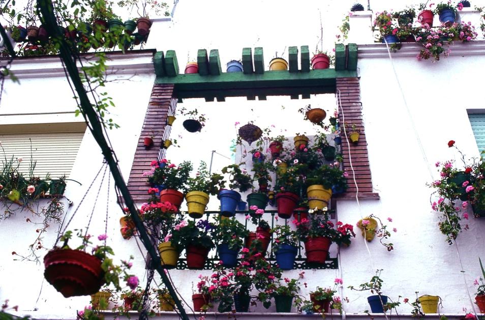 壁の花々2 セビリア  Wall's flowers 2 Sevilla   ⓒToshihiko Shibano