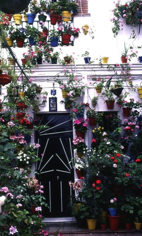 壁の花々1 セビリア  Wall's flowers 1 Sevilla   ⓒToshihiko Shibano