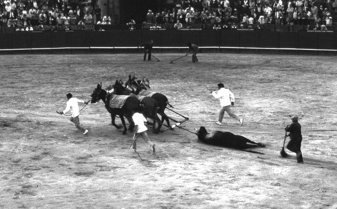 運命の死 2 Fatal death 2   一番最後に流れる血を掃き清める人がいる。闘牛にされる牛は、『特別な牧場で家族そろって愛情をこめながら大事に育てられる』 というドキュメンタリーを見たことがある。 ⓒToshihiko Shibano