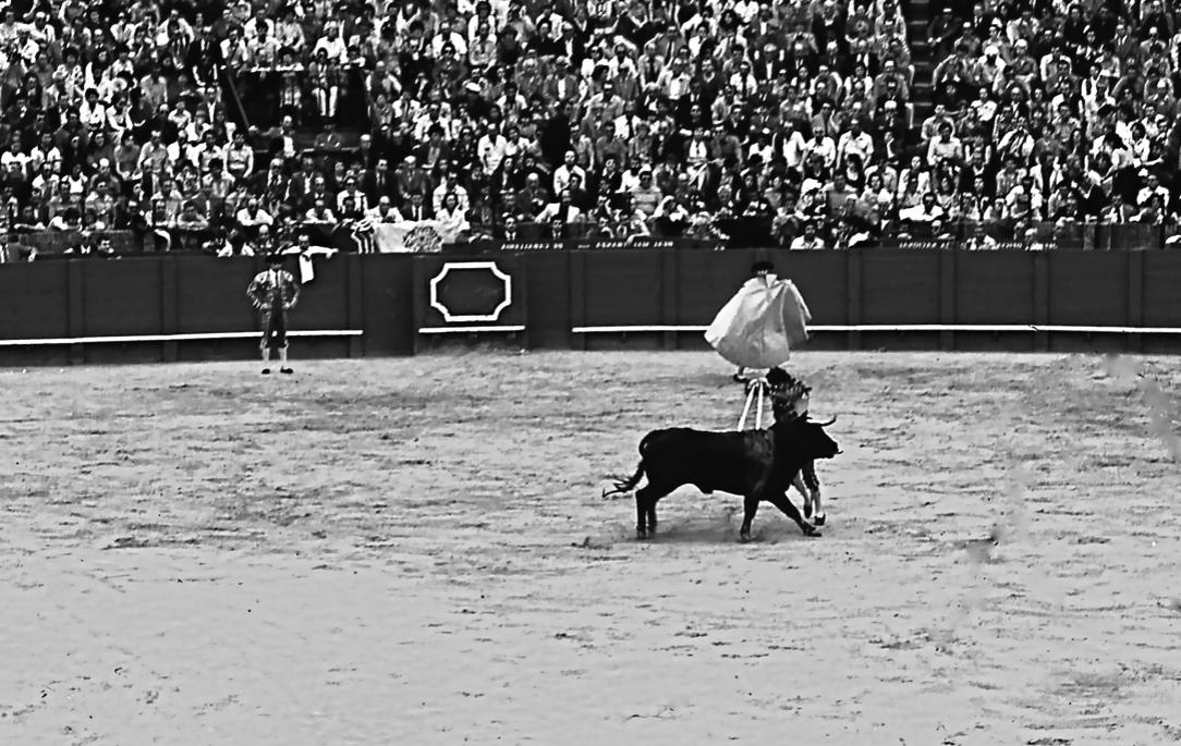 バンデリジェーロ 1 Banderillero 1 飾りのついた銛( バンデリージャ)を背中に打ち込む。牛の正面に立ち、向かってきたらわずかに体を横に避けて刺す。闘牛とは、つまるところショウアップされた男たちの命がけの度胸試し?   ⓒToshihiko Shibano