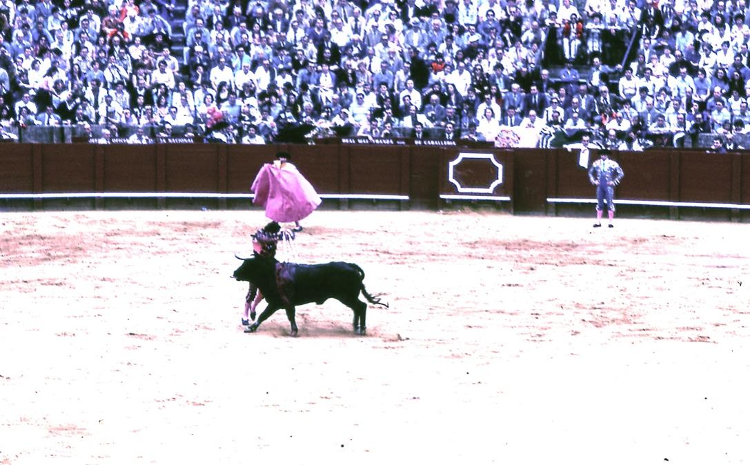 バンデリジェーロ 2 Banderillero 2 銛を打ち込むのは、ピカドールに槍で刺されてやる気を失くした牛に頑張れとはっぱをかける意味があるらしい。というかやっぱりどれだけ格好良くやれるかが問われているのだろう。  ⓒToshihiko Shibano