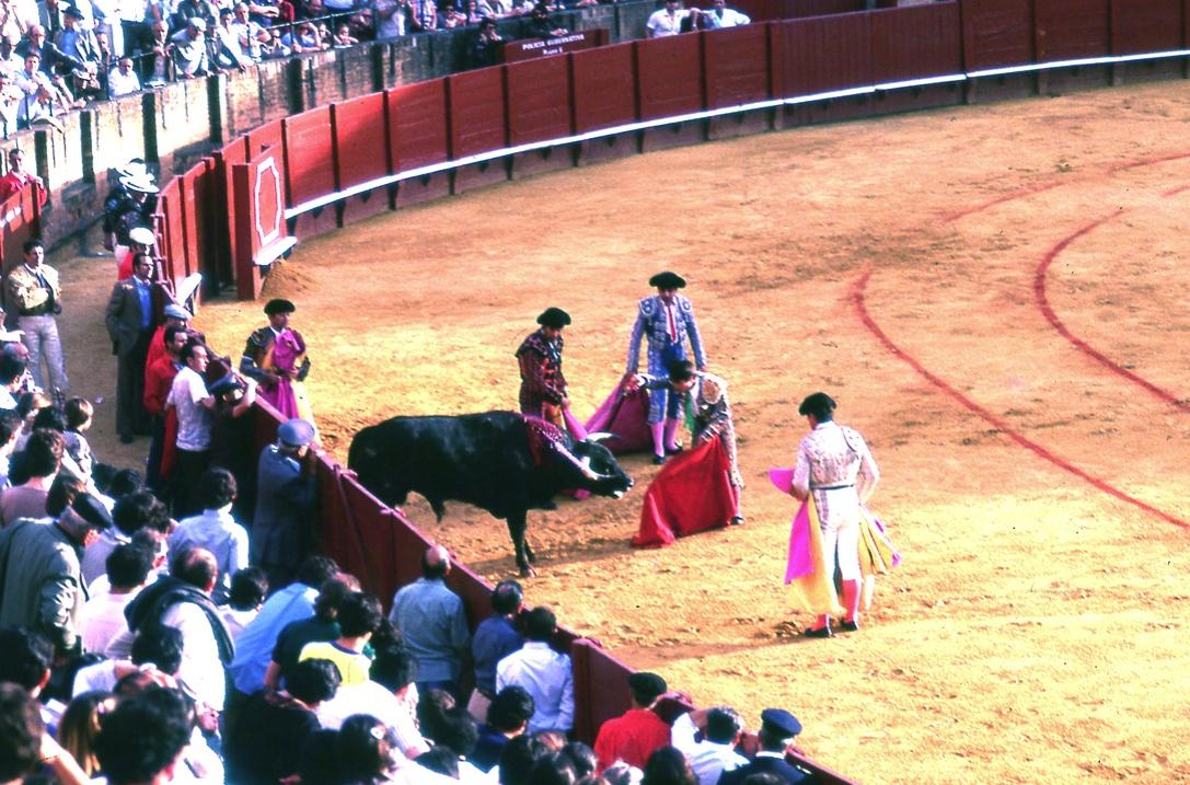 マタドール4 Matador 4 マタドールがトドメを刺す。    ⓒToshihiko Shibano